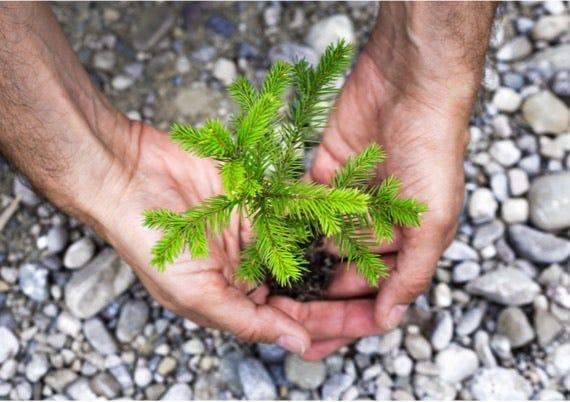 Planteringsutrustning